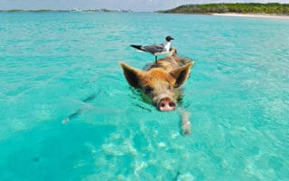Family vacation to Pig Beach in The Bahamas